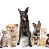 DOGBED-小型犬から大型犬、パピーからシニア、そして猫達も大好きなドッグベッド