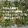 【閲覧ちょい注意!】兵庫県でカメムシ大量発生!