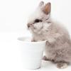 ペットウサギのしつけ|飼育にトレーニングを導入する理由とその効果