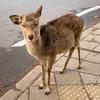 【奈良】古都・奈良を巡る【奈良県】