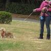 稲毛お散歩トレーニング。