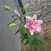 お花を見て明るい気分に