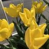 【庭仕事】4月の我が庭レポート