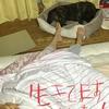 日本スピッツ マコの危機!いやハハ危機一髪!の巻〜_(┐「ε:)_ズコー