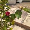 花が咲いたぁ~