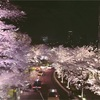東京ミッドタウンの夜桜。