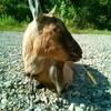 ヤギを飼う前に: ヤギのエサの購入先を探した