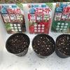 【やってみた】サニーレタス・ミニトマト・万能葉ねぎの種をまいた!