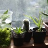 【観葉植物】我が家には足りないものがある。それは葉っぱ!【テラリウム】