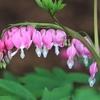季節の花(令和三年四月 下)