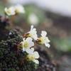 旭岳~トムラウシ山縦走:「神々の遊ぶ庭」の動植物