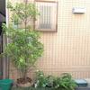 日陰の植栽
