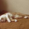 猫に恩返しをさせないことに定評のある私