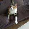 【愛猫日記】毎日アンヌさん#292