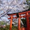 【神泉苑の桜】橋を渡って願いを叶えよう!可愛いアヒルにも遭遇