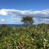 愛の丘 〜 ハマナスの恵み