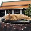 バンコクの最大で最古のお寺「ワット・ポー」はタイの猫寺だった(世界の猫探し30~35匹目)