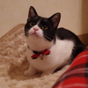 今日の黒猫モモ&白黒猫ナナの動画ー669