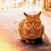 映画「寅さん」の聖地 柴又で暮らすフーテンの猫