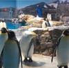 【長崎情報】ペンギン水族館その2