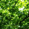 温泉旅とワイナリー 山梨県 勝沼のワイナリーたち