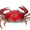 士業男子が、もし蟹が食用でなく愛玩用として子供たちに人気のペットであったらどうなるか想像した話