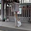 日本旅行の赤い風船、手ぶらでOKクーポンってなに?京都旅行計画