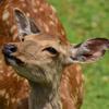 本日、奈良県にある鹿苑に行ってきました。