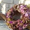 秋色紫陽花のような人になりたい❤