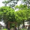新緑の大宮公園界隈