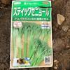 作物No.10 スティックセニョールの播種〜有効期限切れの種でもあきらめない〜
