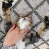 7月前半の #ねこ #cat #猫 その4