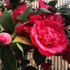 4月の緑道の花々