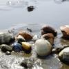 九十九里浜10km以上に大量のハマグリ・原因不明なんですと