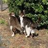 猫フレーメン & チョット嬉しい事