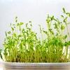 生ゴミを減らせる&貧乏飯の味方!野菜のヘタや豆苗をどんどん活用しよう。