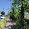 堀川の源流(庄内川)を目指して その10 筋違橋~城北橋