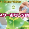 【YouTube 投稿】ハムスターハムスターおもしろ動画集#3-It's a funny video of a hamster #3-