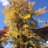 【十日町市・松代】「まつだい駅」から歩いてすぐの『長命寺の大イチョウ』がすっごく立派でした!
