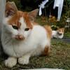 猫はかわいいけど狩りをする野獣?獲物を持ち帰る