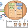 じじぃの「科学・芸術_382_免疫細胞と腸内細菌」