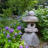 潮来市・二本松寺であじさいと田園風景を堪能