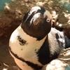【南アフリカ】ケープタウンおすすめ観光スポット10選(喜望峰、ペンギンなど)
