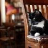 「黒猫」(2) イギリス編:ヨーロッパでは黒猫の人気がうなぎ登り.イギリス各地で黒猫のアイドルが生まれています.chief mouser:主席ネズミ捕獲官パーマストン,猫カフェのビクター,老舗パブのネルソン.「今でも黒猫の里親捜しは,他の猫よりも格段に大変なんです」とはいうものの,魔女狩りと黒猫への迫害の嵐はイギリスでは比較的穏やか.19世紀を迎えると更に風向きが変わってきました.