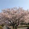 2019.4.7  岩本山花見トレラン