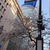 都内・日本橋さくら通りの桜🌸