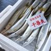 2020年8月22日 小浜漁港 お魚情報
