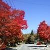 八ヶ岳南麓は紅葉真っ盛り