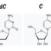 DNAとRNAの違いをおさえておこう
