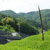 京都府和束町(茶源郷)